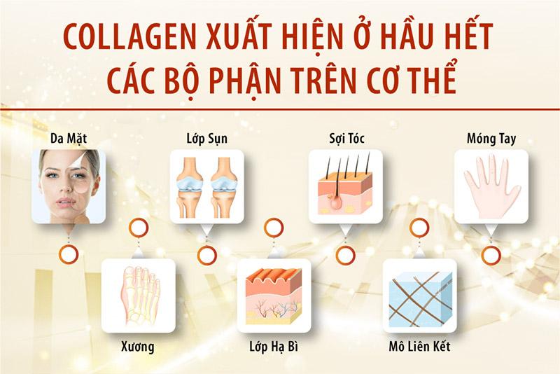 lợi ích của Collagen đối với sắc đẹp